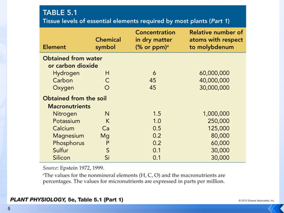  Sources and Uses  Activates enzymes; osmoregulation (stomates in particular)  Deficiency Symptoms  Marginal chlorosis followed by necrotic lesions  Increased suceptibility to root-rot 26