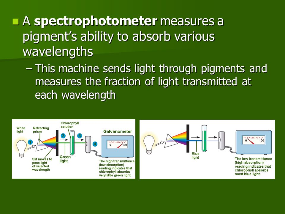 A spectrophotometer measures a pigment's ability to absorb various wavelengths A spectrophotometer measures a pigment's ability to absorb various wavelengths –This machine sends light through pigments and measures the fraction of light transmitted at each wavelength