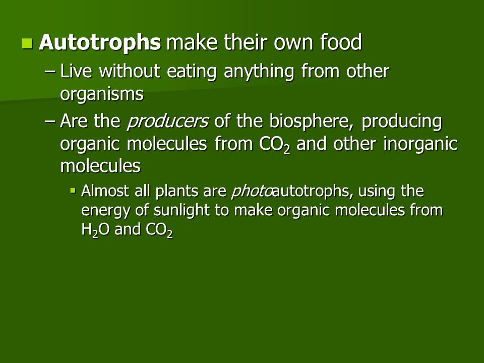 Autotrophs make their own food Autotrophs make their own food –Live without eating anything from other organisms –Are the producers of the biosphere, producing organic molecules from CO 2 and other inorganic molecules  Almost all plants are photoautotrophs, using the energy of sunlight to make organic molecules from H 2 O and CO 2