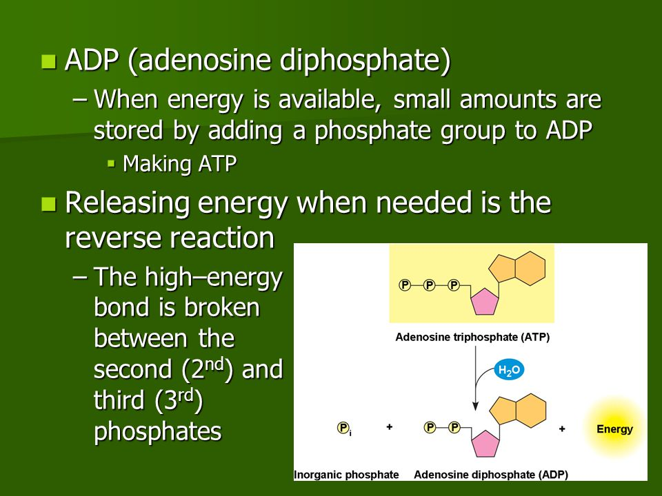 Photosynthesis Reactions 2 types of reactions 2 types of reactions –Light–dependent reactions  Photo part  Requires light –Summary: uses light to produce oxygen (O 2 ) gas, ATP and NADPH –Light–independent reactions (Calvin cycle)  Synthesis part  Does not require light –Summary: uses CO 2, ATP and NADPH to produce sugar