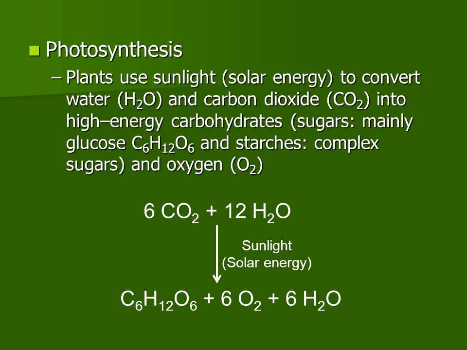 Photosynthesis Photosynthesis –Plants use sunlight (solar energy) to convert water (H 2 O) and carbon dioxide (CO 2 ) into high–energy carbohydrates (
