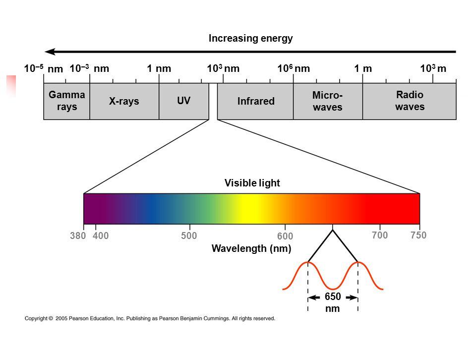 Increasing energy Gamma rays X-rays UV Infrared Micro- waves Radio waves Visible light 380400500 600 700750 Wavelength (nm) 650 nm 10 –5 10 –3 nm 1 nmnm10 3 nm10 6 nm1 m10 3 m