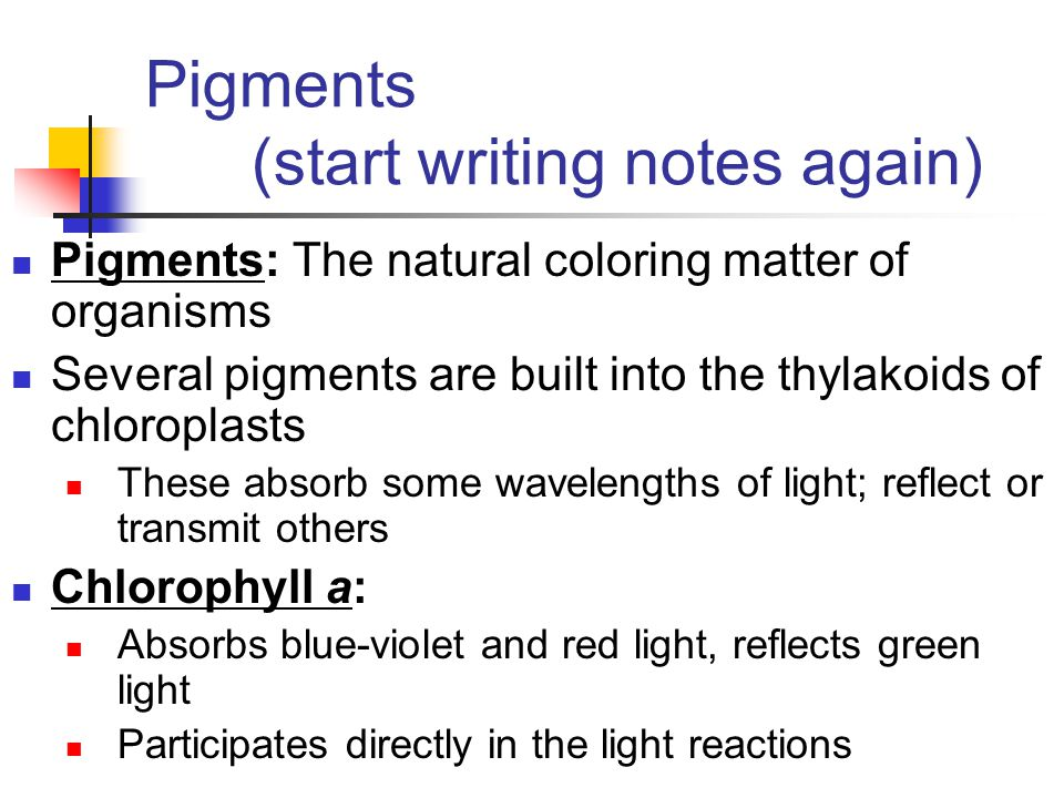 Pigments (start writing notes again) Pigments: The natural coloring matter of organisms Several pigments are built into the thylakoids of chloroplasts These absorb some wavelengths of light; reflect or transmit others Chlorophyll a: Absorbs blue-violet and red light, reflects green light Participates directly in the light reactions