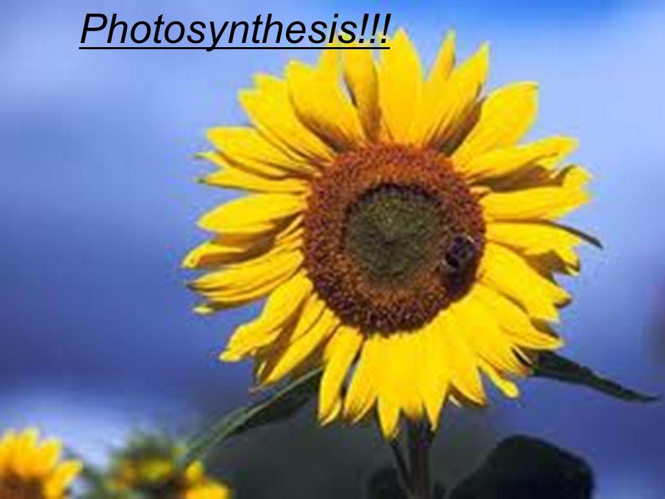 Photosynthesis!!!