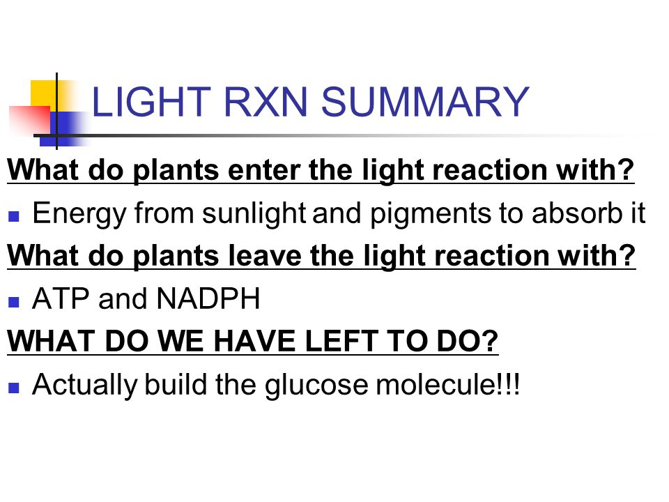 LIGHT RXN SUMMARY What do plants enter the light reaction with.