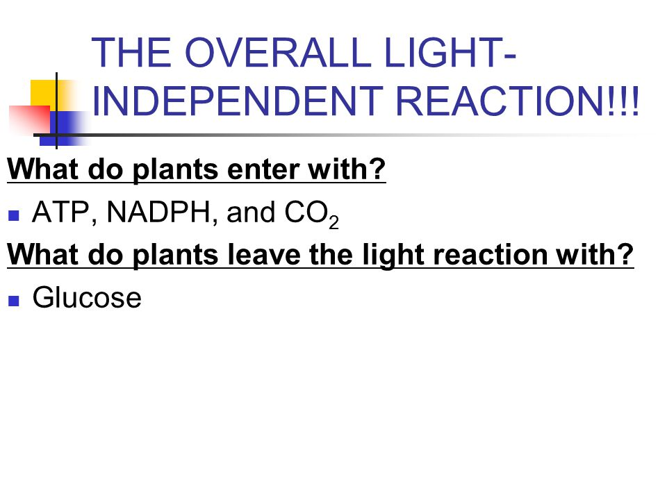 THE OVERALL LIGHT- INDEPENDENT REACTION!!. What do plants enter with.