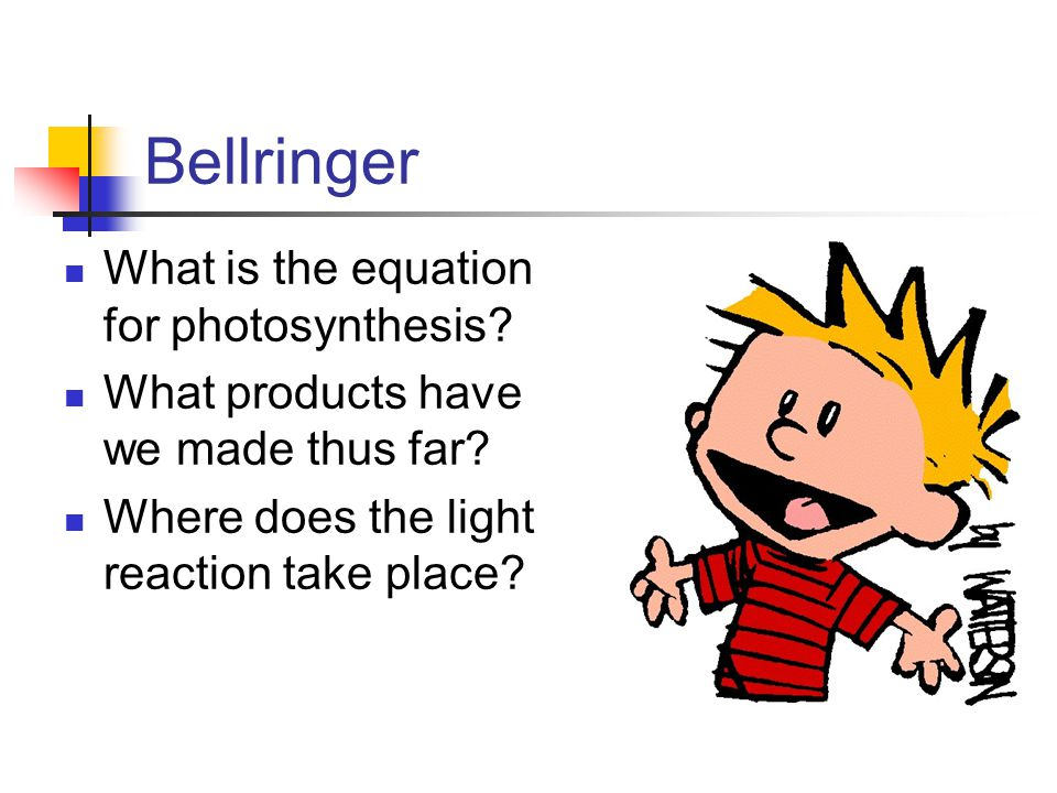 Bellringer What is the equation for photosynthesis? What products have we made thus far? Where does the light reaction take place?