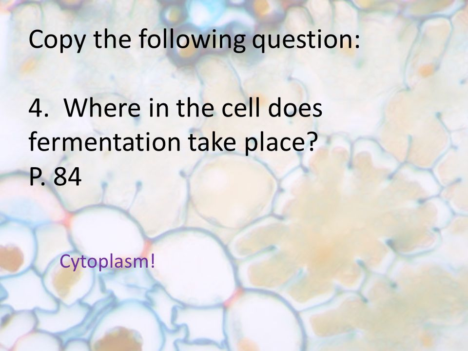 Copy the following question: 4. Where in the cell does fermentation take place P. 84 Cytoplasm!