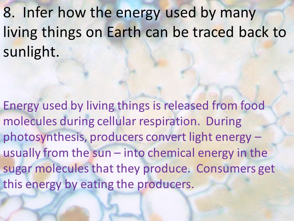 8. Infer how the energy used by many living things on Earth can be traced back to sunlight.