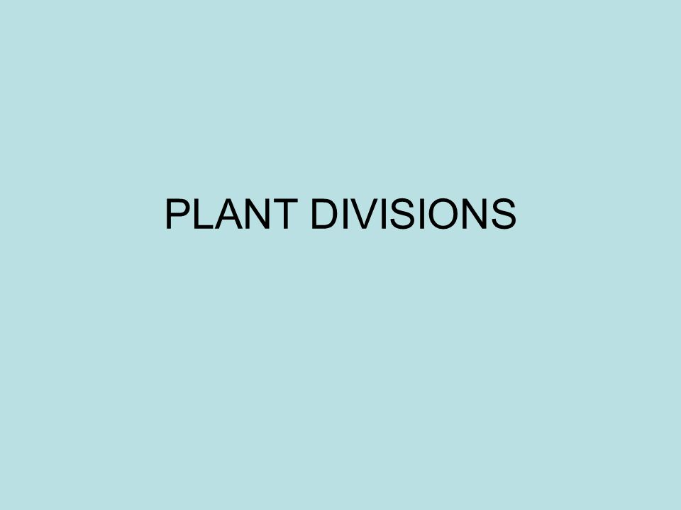 Plants NOTE: We use the term Divisions instead of the term Phyla when referring to plants.