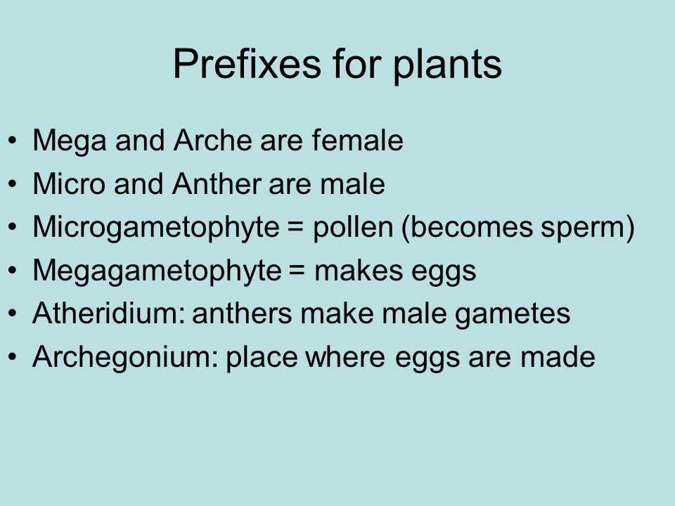 Prefixes for plants Mega and Arche are female Micro and Anther are male Microgametophyte = pollen (becomes sperm) Megagametophyte = makes eggs Atheridium: anthers make male gametes Archegonium: place where eggs are made