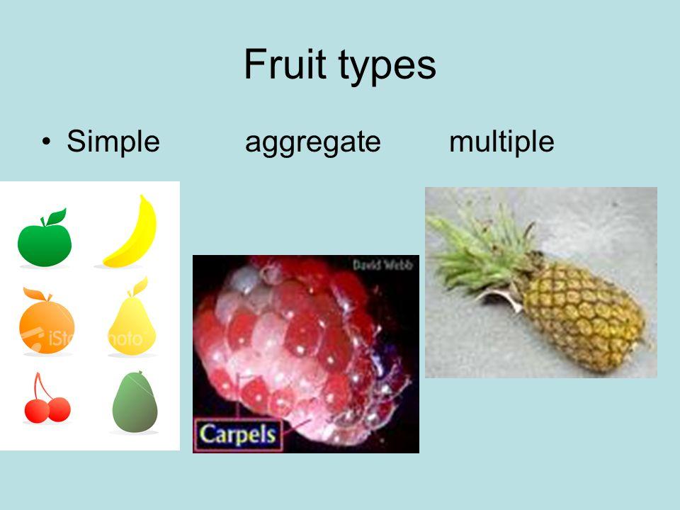 Fruit types Simpleaggregatemultiple