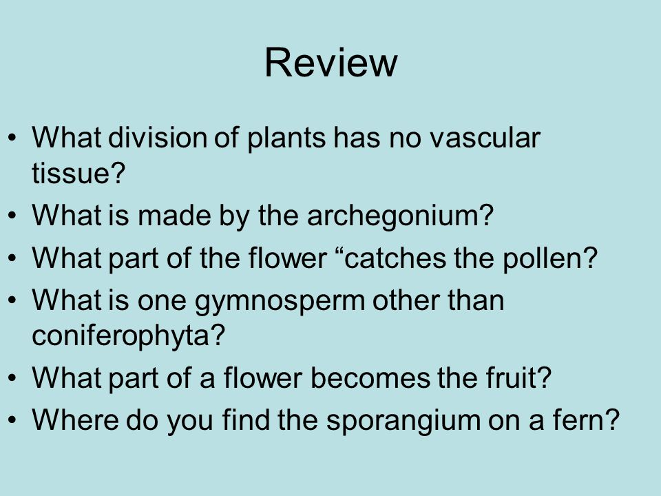 Review What division of plants has no vascular tissue.
