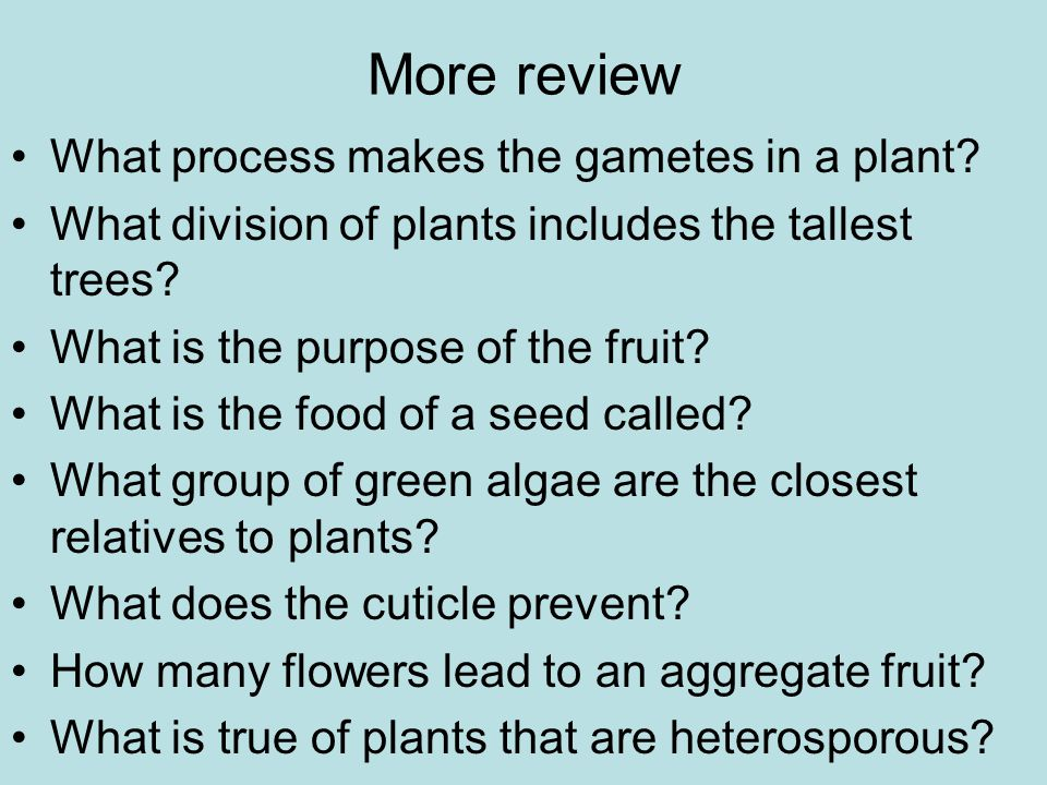 More review What process makes the gametes in a plant.