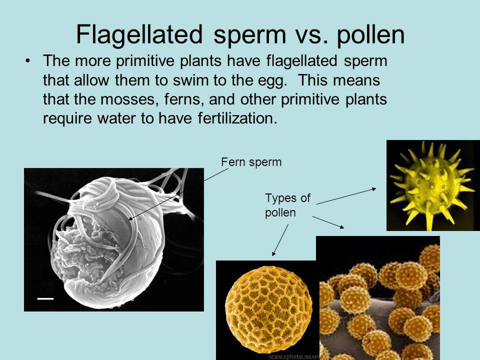 Flagellated sperm vs.