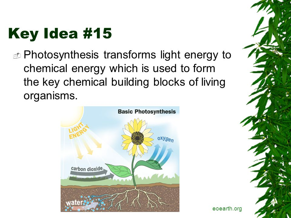 Key Idea #15  Photosynthesis transforms light energy to chemical energy which is used to form the key chemical building blocks of living organisms.