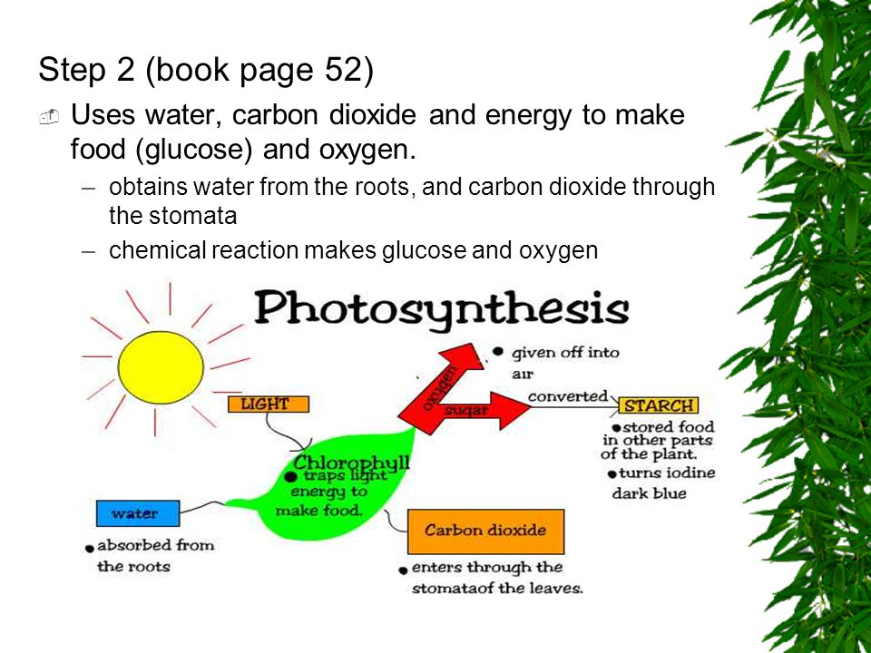 Step 2 (book page 52)  Uses water, carbon dioxide and energy to make food (glucose) and oxygen.