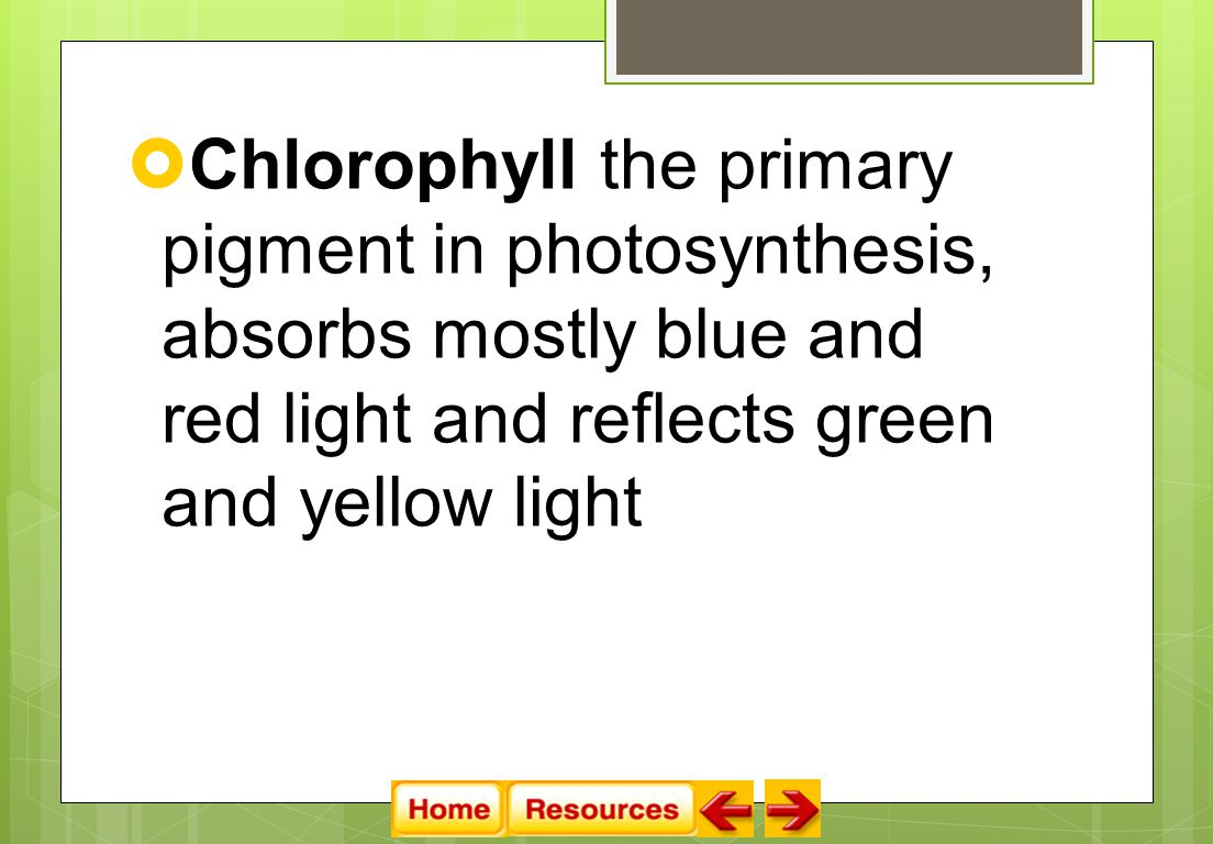  Chlorophyll the primary pigment in photosynthesis, absorbs mostly blue and red light and reflects green and yellow light
