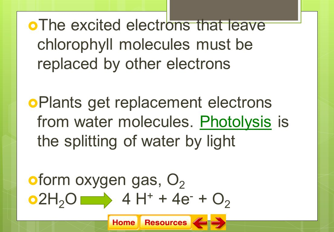  The excited electrons that leave chlorophyll molecules must be replaced by other electrons  Plants get replacement electrons from water molecules.