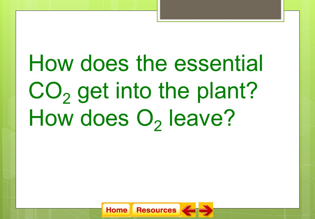 How does the essential CO 2 get into the plant How does O 2 leave