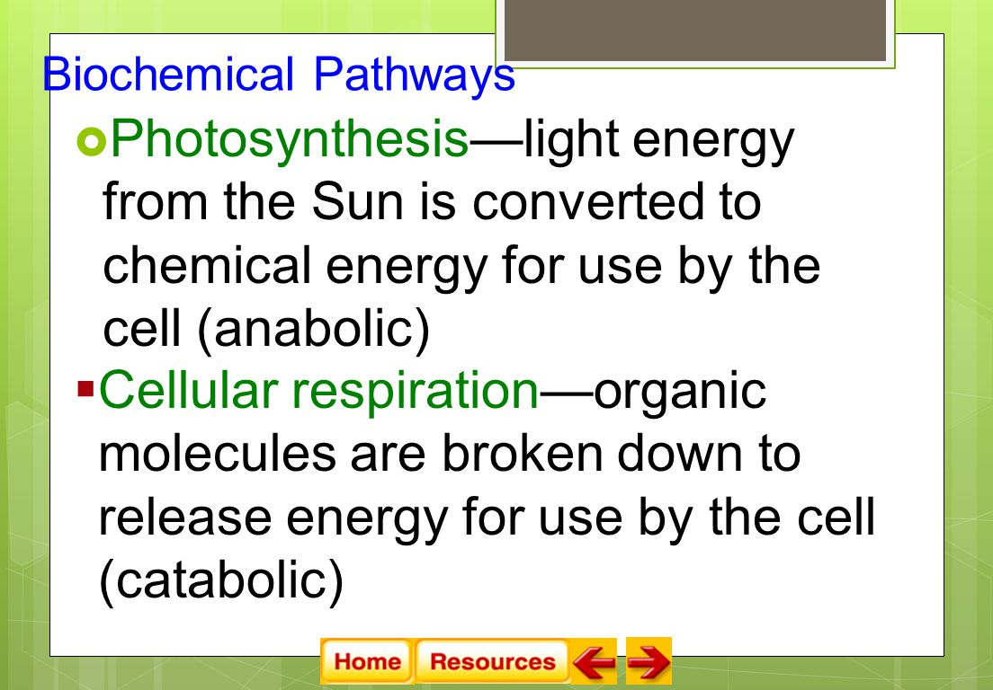  Photosynthesis—light energy from the Sun is converted to chemical energy for use by the cell (anabolic)  Cellular respiration—organic molecules are broken down to release energy for use by the cell (catabolic) Biochemical Pathways