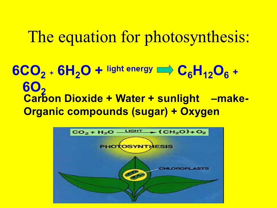 Photosynthesis & Cellular Respiration are related: The oxygen (O 2 ) and some of the organic compounds produced by photosynthesis are used by cells in a process called cellular respiration.