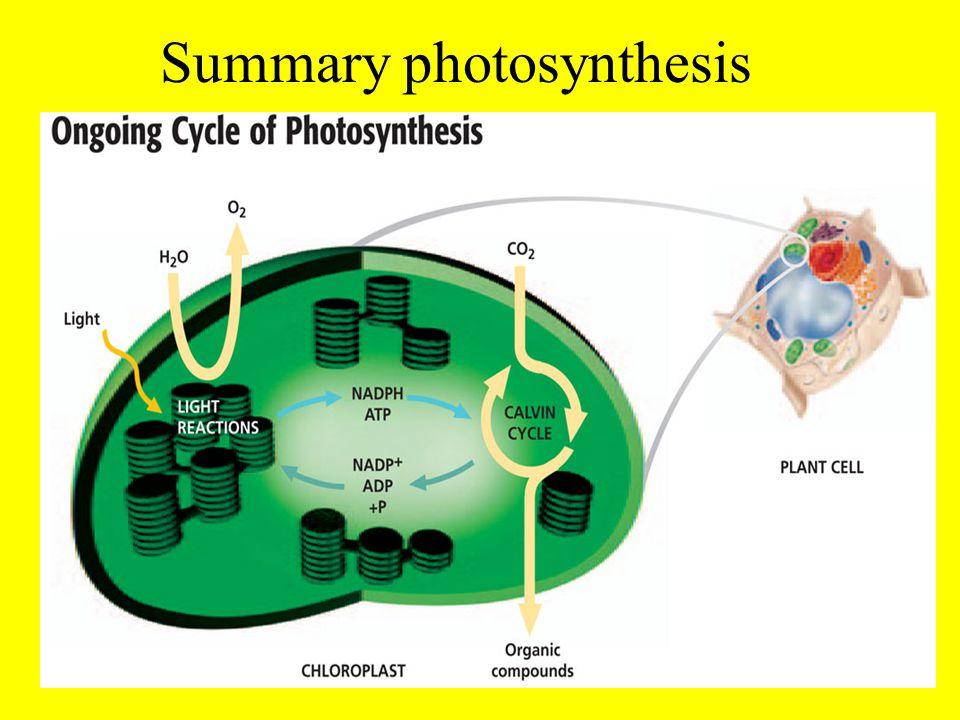 Summary photosynthesis