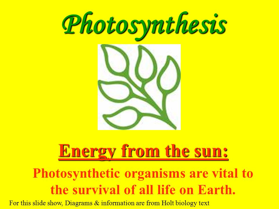 Photosynthesis Energy from the sun: Photosynthetic organisms are vital to the survival of all life on Earth. For this slide show, Diagrams & informati