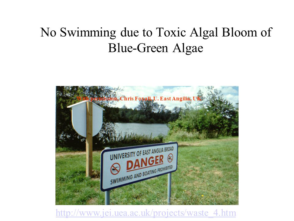 No Swimming due to Toxic Algal Bloom of Blue-Green Algae http://www.jei.uea.ac.uk/projects/waste_4.htm With permission, Chris Foxall, U. East Angilia,