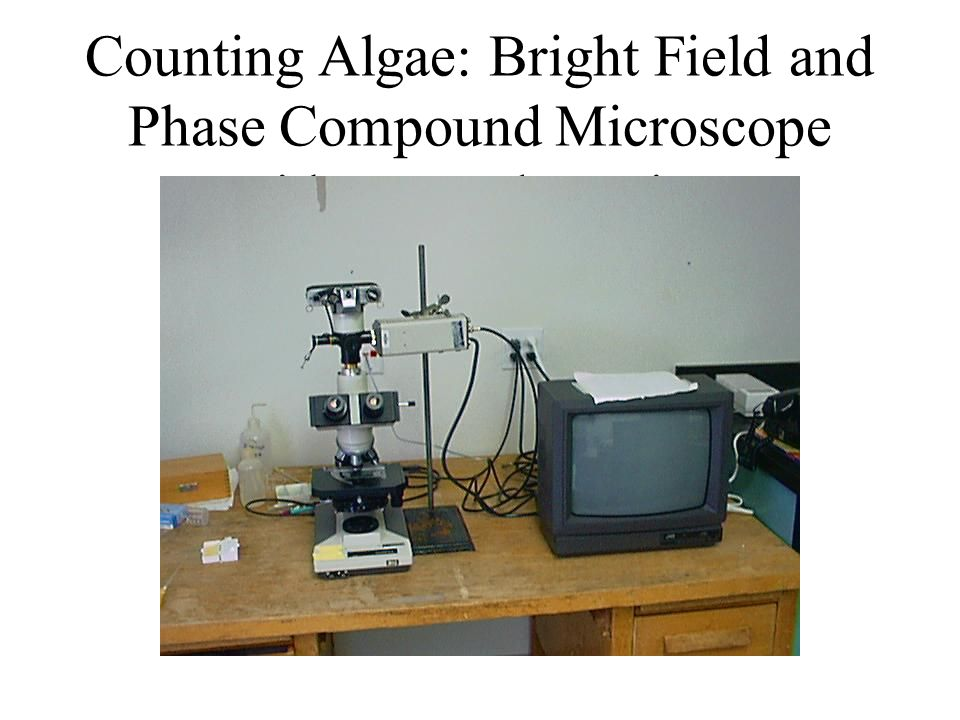 Counting Algae: Bright Field and Phase Compound Microscope with TV and monitor
