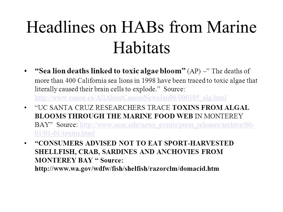 "Headlines on HABs from Marine Habitats ""Sea lion deaths linked to toxic algae bloom"" (AP) –"" The deaths of more than 400 California sea lions in 1998"