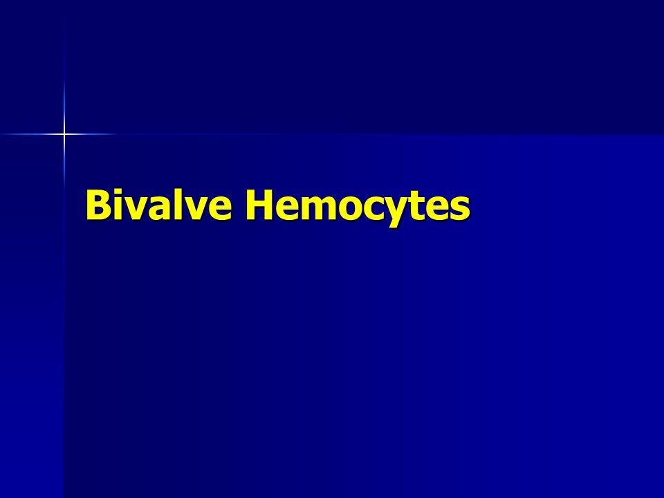 Bivalve Hemocytes