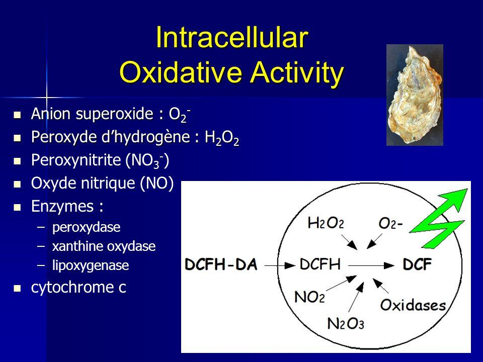 Intracellular Oxidative Activity Anion superoxide : O 2 - Anion superoxide : O 2 - Peroxyde d'hydrogène : H 2 O 2 Peroxyde d'hydrogène : H 2 O 2 Perox