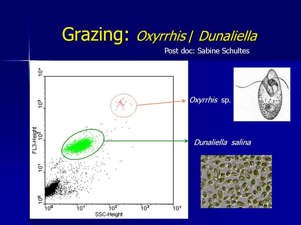Grazing: Oxyrrhis / Dunaliella Oxyrrhis sp. Dunaliella salina Post doc: Sabine Schultes