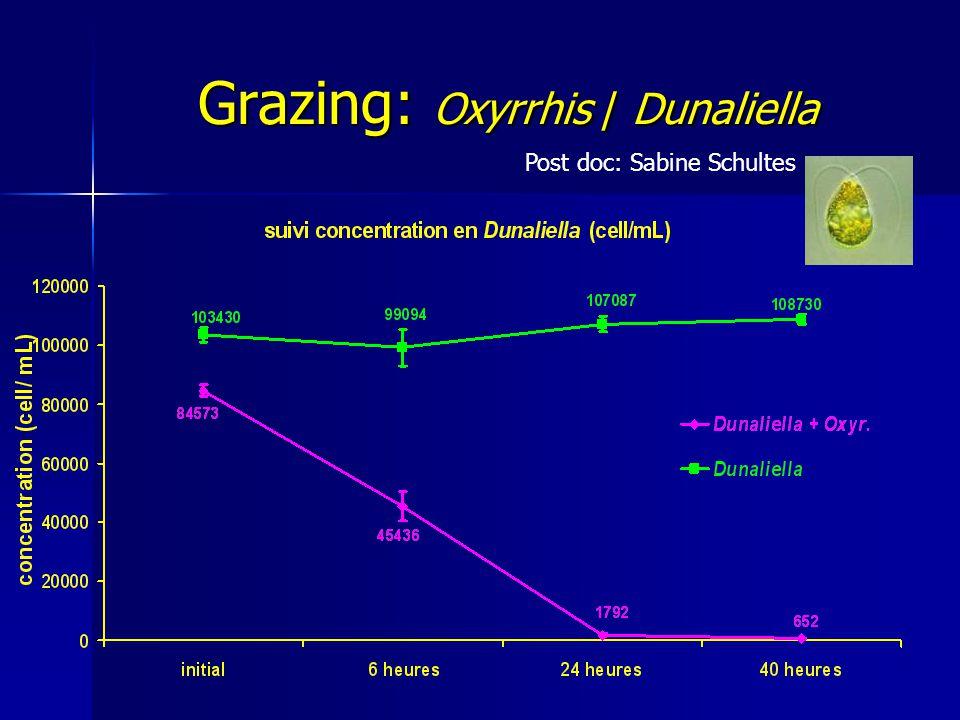 Grazing: Oxyrrhis / Dunaliella Post doc: Sabine Schultes