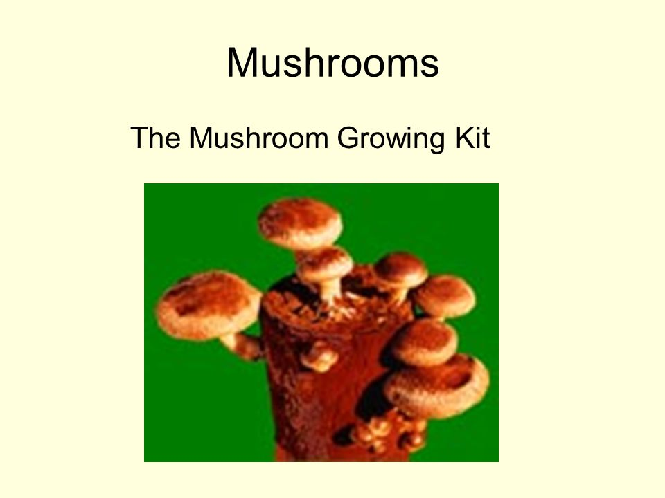 Mushrooms The Mushroom Growing Kit