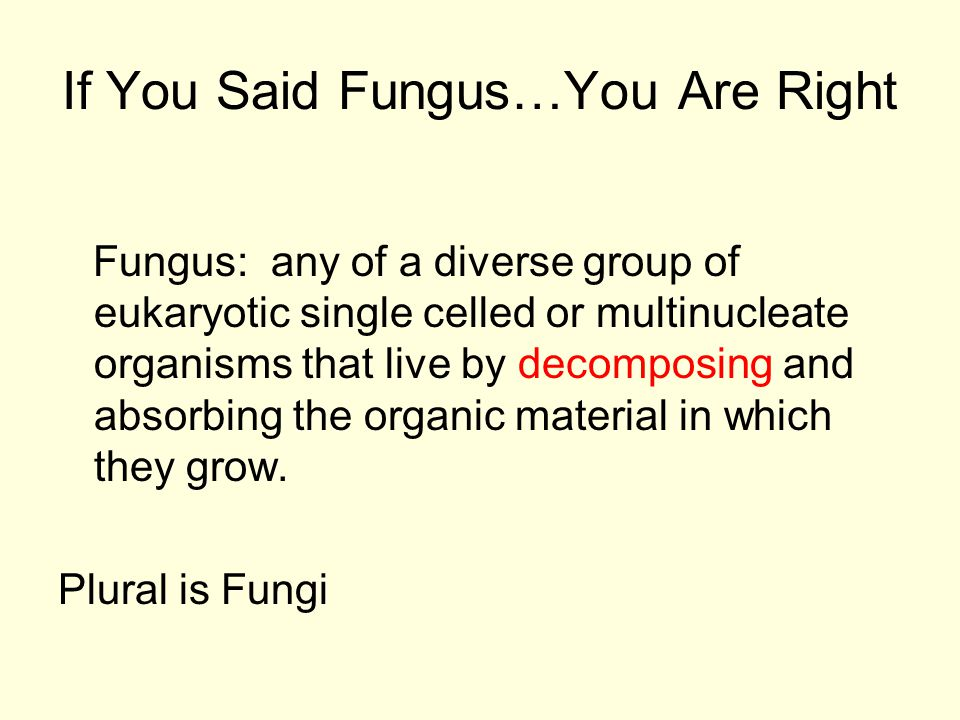 If You Said Fungus…You Are Right Fungus: any of a diverse group of eukaryotic single celled or multinucleate organisms that live by decomposing and absorbing the organic material in which they grow.