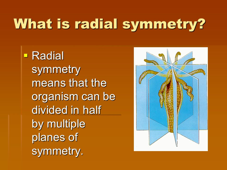 What is radial symmetry?  Radial symmetry means that the organism can be divided in half by multiple planes of symmetry.