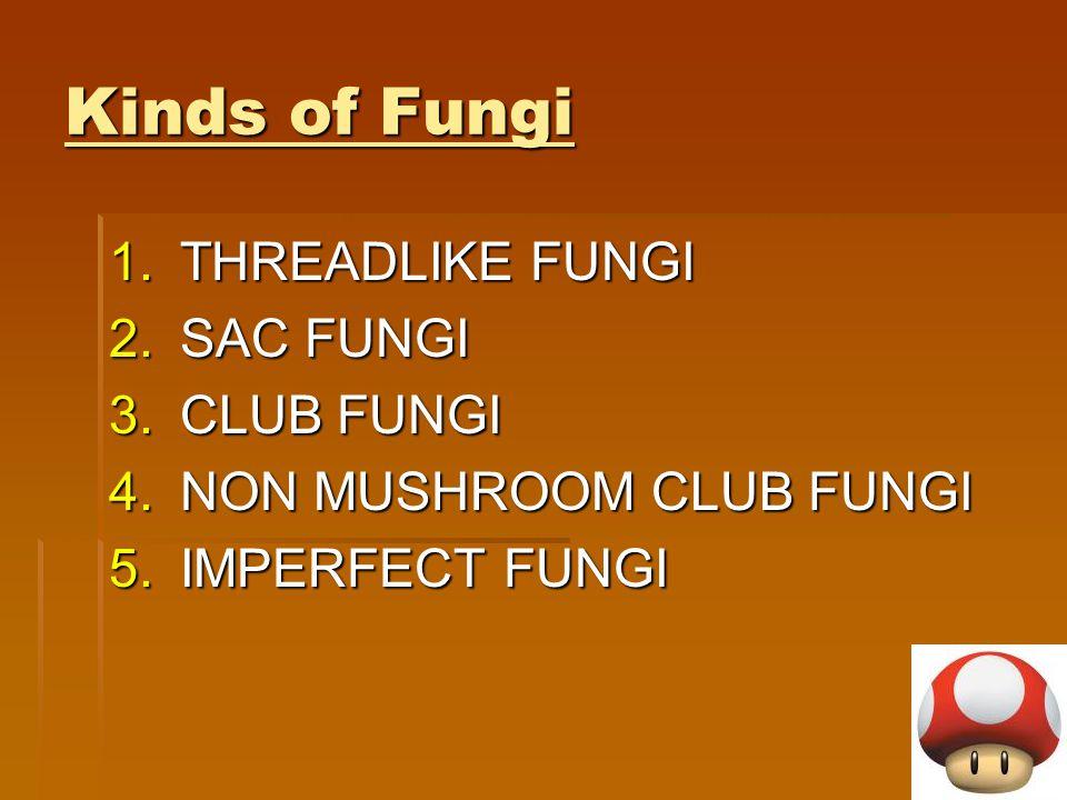 Kinds of Fungi 1.THREADLIKE FUNGI 2.SAC FUNGI 3.CLUB FUNGI 4.NON MUSHROOM CLUB FUNGI 5.IMPERFECT FUNGI