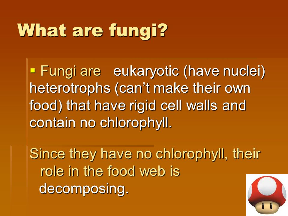 What are fungi?  Fungi are Since they have no chlorophyll, their role in the food web is eukaryotic (have nuclei) heterotrophs (can't make their own
