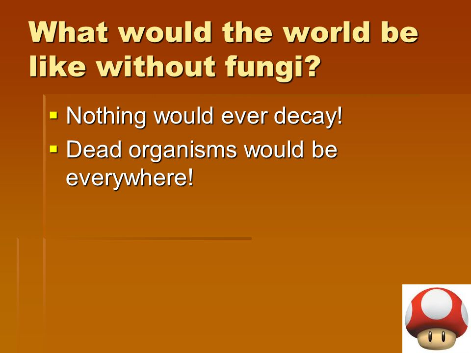 What would the world be like without fungi?  Nothing would ever decay!  Dead organisms would be everywhere!