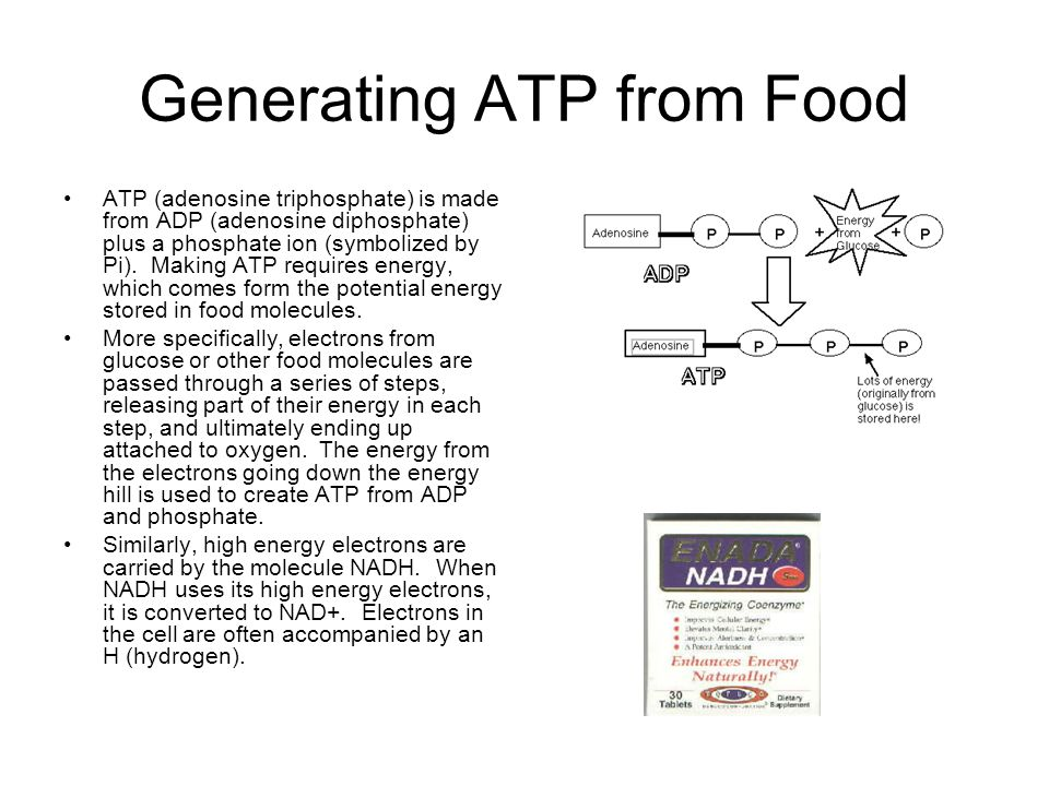Generating ATP from Food ATP (adenosine triphosphate) is made from ADP (adenosine diphosphate) plus a phosphate ion (symbolized by Pi).