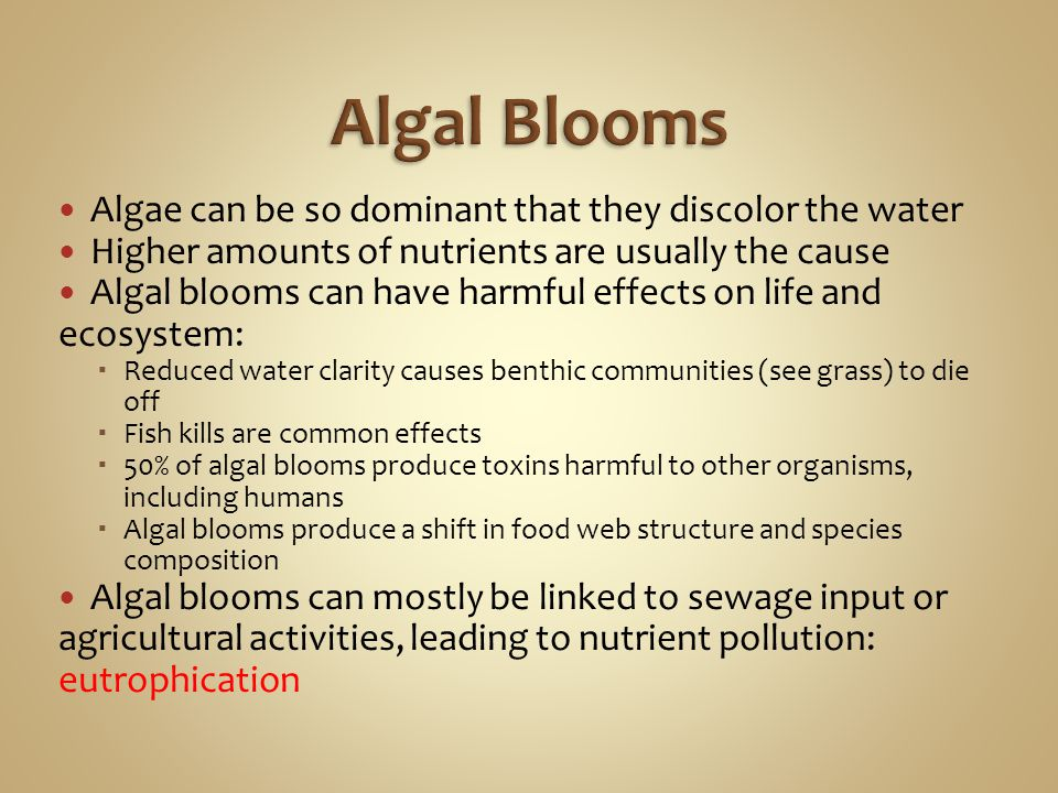 Algae can be so dominant that they discolor the water Higher amounts of nutrients are usually the cause Algal blooms can have harmful effects on life
