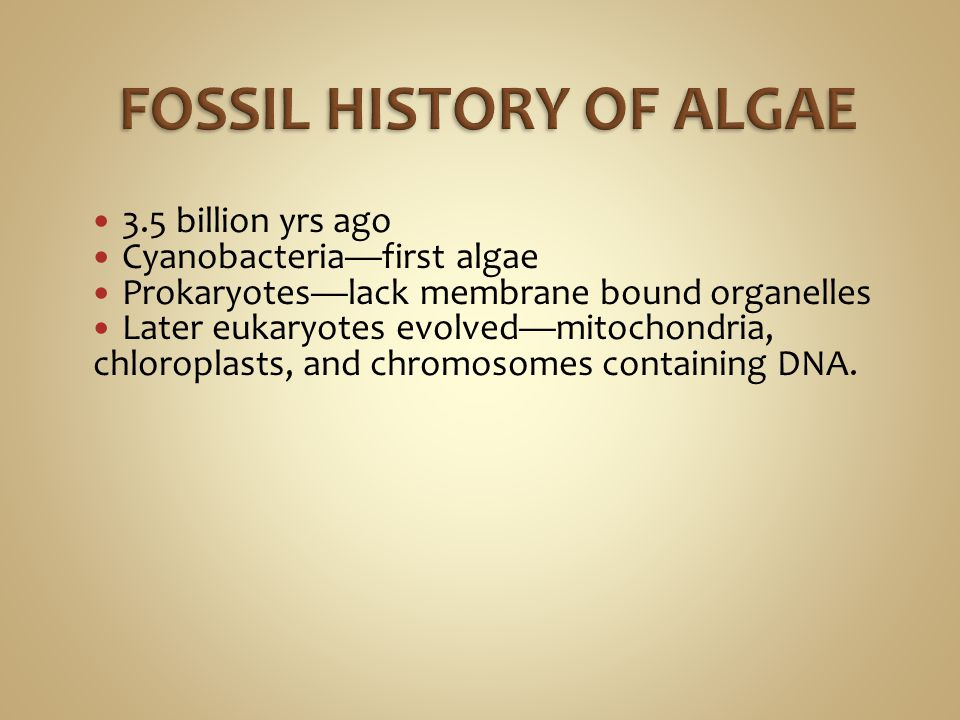 Oil is very important fossil fuels comes from diatom remains.