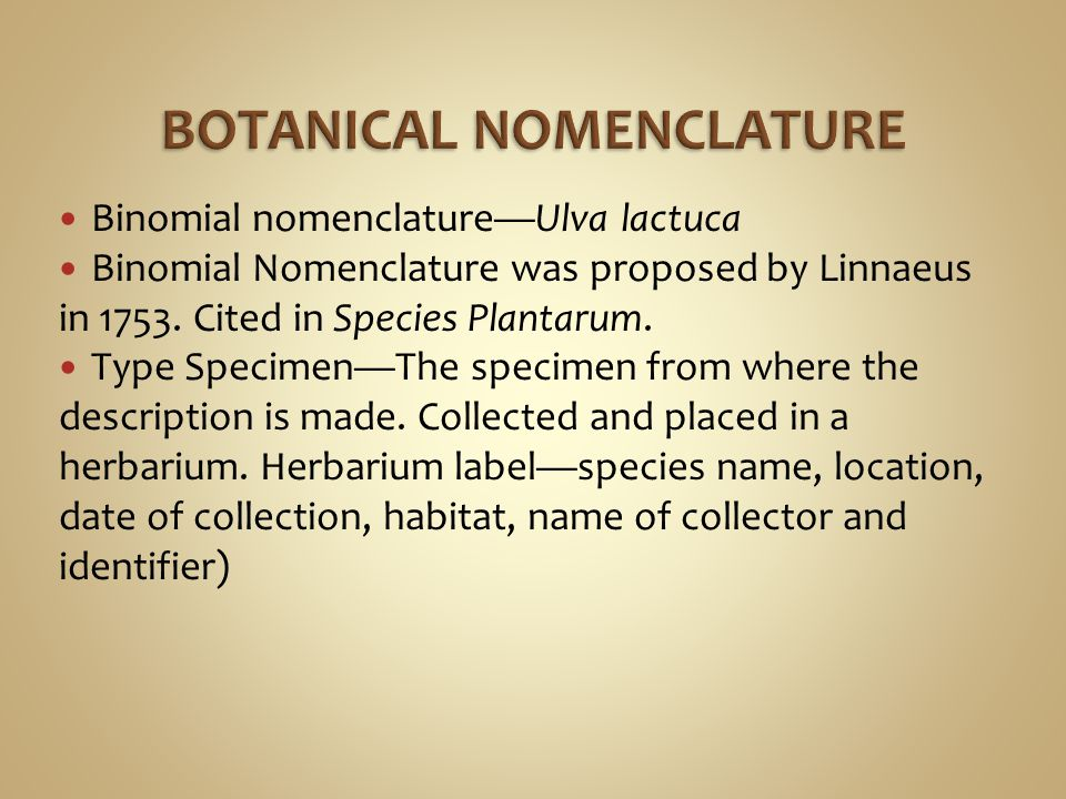 Binomial nomenclature—Ulva lactuca Binomial Nomenclature was proposed by Linnaeus in 1753. Cited in Species Plantarum. Type Specimen—The specimen from