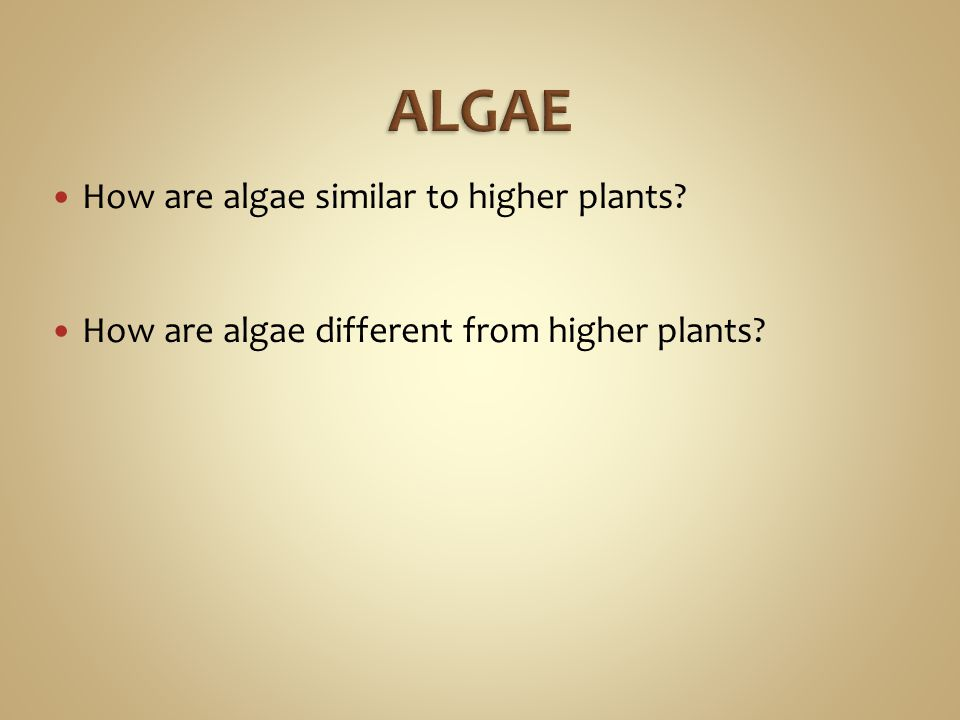 How are algae similar to higher plants? How are algae different from higher plants?