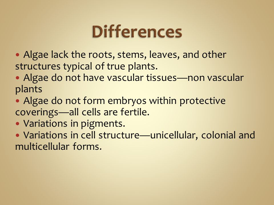 Algae lack the roots, stems, leaves, and other structures typical of true plants. Algae do not have vascular tissues—non vascular plants Algae do not