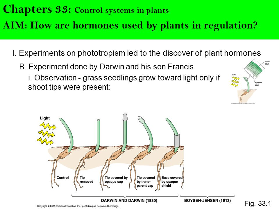 I. Experiments on phototropism led to the discover of plant hormones Chapters 33: Control systems in plants B. Experiment done by Darwin and his son F