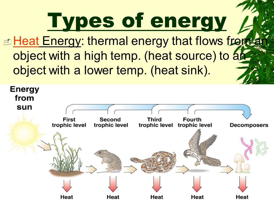 Do Now:  Define energy and briefly describe how the different forms contribute to the continual energy needs of organisms