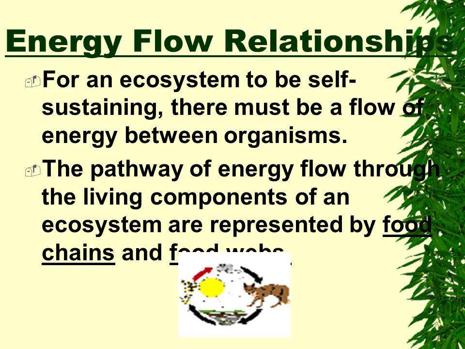 Types of Energy Potential Energy Mechanical (Kinetic) Energy Heat Energy Nuclear Energy Electrical Energy Chemical Energy Radiant (Solar)